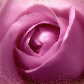 Gorgeous Soft Pink Rose With Gold Frames 1 by Johanna Hurmerinta
