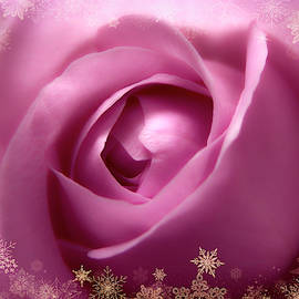 Johanna Hurmerinta - Gorgeous Soft Pink Rose With Gold Frames 2