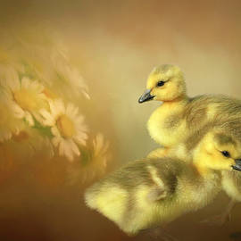 Goslings and Daisies by Donna Kennedy