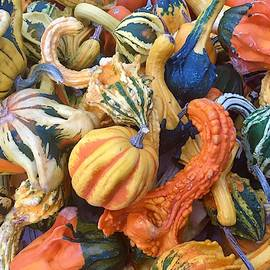 Gourds Everywhere by Denise Mazzocco