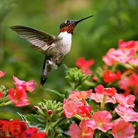 Graceful Garden Jewel Hummingbird Square by Christina Rollo