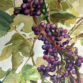 Watercolor Of A Grapevine by Greta Corens