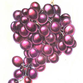 Grapes - Marker Sketch by Miriam Danar