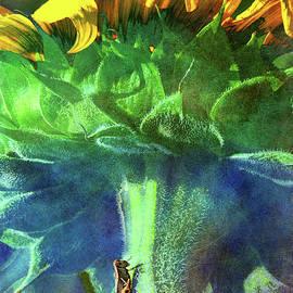Grasshopper On Kansas Sunflower by R christopher Vest
