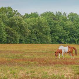 Grazing Paint Horse by Kristia Adams