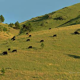 Grazing the Hills by Kae Cheatham