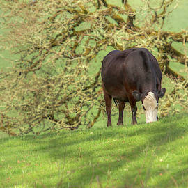 Grazing Under The Old Oak 0916 by Kristina Rinell