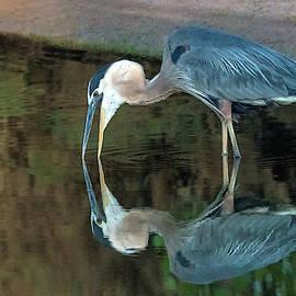 Great Blue Heron 8555-061919 by Tam Ryan