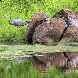 Great Blue Heron and Boulder by Karen Adams