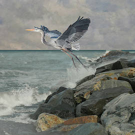 Great Blue Heron at Sand Key by Spadecaller