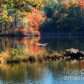 Great Blue Heron In Flight by Charlene Cox