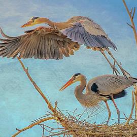 Great Blue Heron Leaving Nest by Lowell Monke