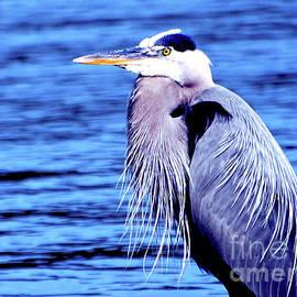 Great Blue Heron by Linda Cox
