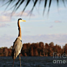 Diann Fisher - Great Blue Heron Pose