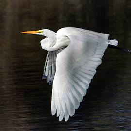 Great Egret 1741-011919 by Tam Ryan