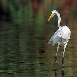 Great Egret 2729-071219 by Tam Ryan