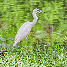 Blue Heron by the River by Judy Kay