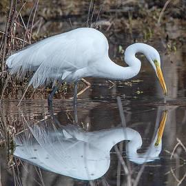 Great Egret In Breeding Plumage Dmsb0154 by Gerry Gantt