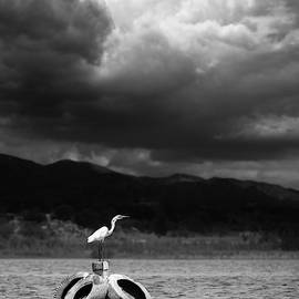 Great Egret on a Post by William Dunigan
