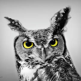 Great Horned Owl Color Select by Brian Wallace