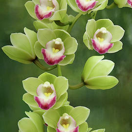 Green and Pink Orchid by Isabela and Skender Cocoli