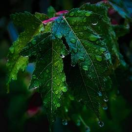 Green and Wet Leaves by Flying Z Photography by Zayne Diamond
