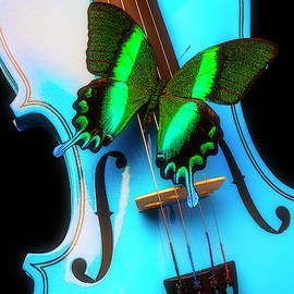 Green Butterfly On Blue Violin by Garry Gay
