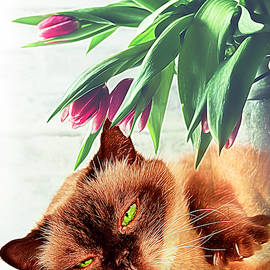 Green Eyed Lady by Debra and Dave Vanderlaan