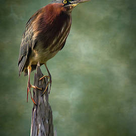 Green Heron Artistic Portrait by Dawn Currie