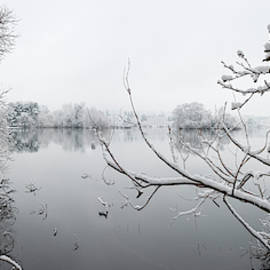 Green Lake Snow and Branches by William Dunigan