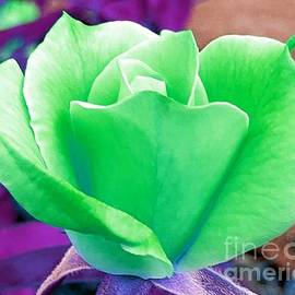 Green Lime Rose by Chad and Stacey Hall