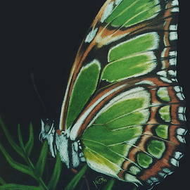 Green Philaethria Dido by Barbara Keith