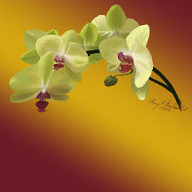 Green Phileanopsis 3 by Gary F Richards