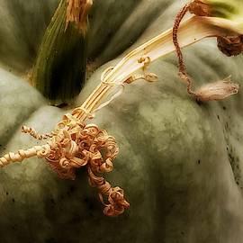 Green Pumpkin by Kathy Barney