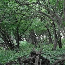 Greenish Woodland by Jeremy Lyman
