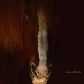 Greet Teddy by Dennis Burton