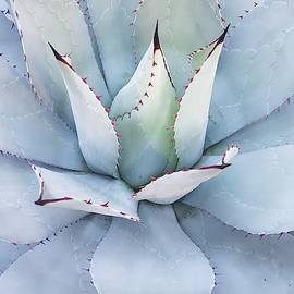 Grey Cactus by Top Wallpapers