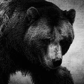 Grizzly Bear Black and White by Judy Vincent