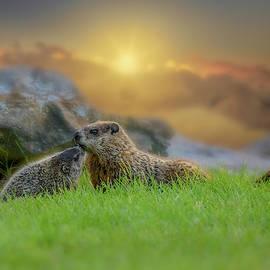 Groundhog Morning by Bob Orsillo