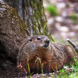 Groundhog  by Susan Rissi Tregoning