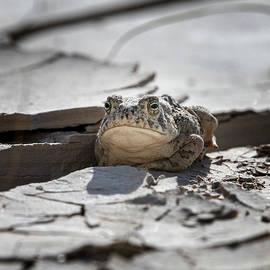 Grumpy Frog by Joan Carroll
