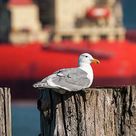 Gull And Ship by Robert Potts