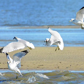 Gull Frenzy by Jerry Griffin