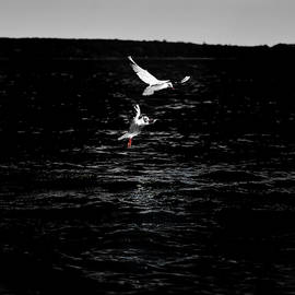 Gulls Stuntmen by Roman Kononov