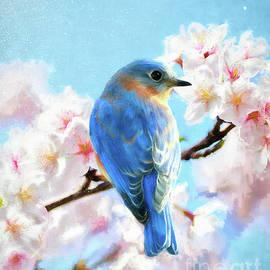 Handsome Gazing Bluebird by Tina LeCour