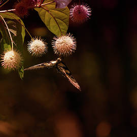 Hanging Around by Denise Harty