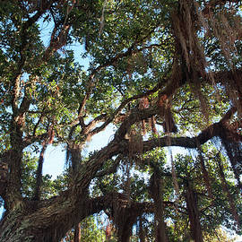 Hanging Vine Tree by Mark Dodd