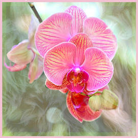 Happy Birthday Orchid by Diann Fisher
