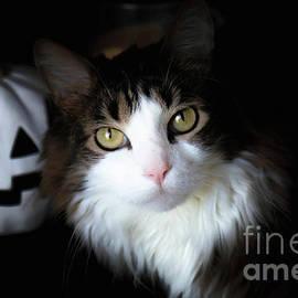Happy Halloween Cat by Veronica Batterson