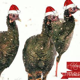 Happy Holiday Turkeys by Tina LeCour